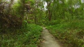 The path through a tropical park. Thailand, Phuket island stock footage