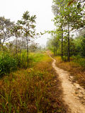 Path in tropical rain forest Stock Photography