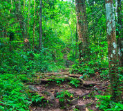 Path in the tropical rainforest Royalty Free Stock Photos