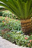 A path in a tropical resort. With nice plantsn Royalty Free Stock Photos