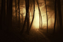 Path trough a dark haunted forest with fog at sunset royalty free stock images