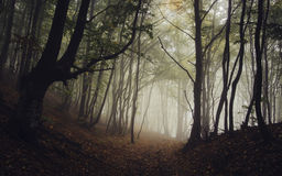 Path trough a dark mysterious forest with fog in autumn Royalty Free Stock Photos
