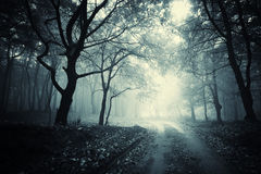 Path trough a dark mysterious forest with fog. Road trough a dark creepy mysterious forest with fog on halloween Royalty Free Stock Images