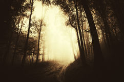 Path trough dark mysterious forest with fog stock photo