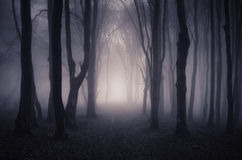 Path trough fantasy forest with mysterious fog Royalty Free Stock Image