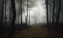 Path trough fantasy forest with mysterious fog in night Royalty Free Stock Images