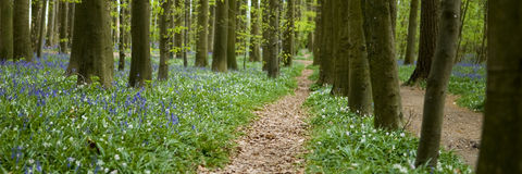 Path trough the forest Royalty Free Stock Image