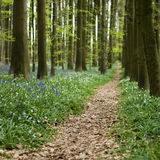 Path trough the forest. A little path in the forest Royalty Free Stock Photography