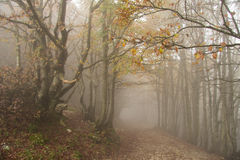 Path trough a forest with fog in autumn. Path trough a strange beautiful forest with fog in autumn Royalty Free Stock Images