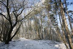 Path trough a frozen forest with frost and snow in winter Stock Image