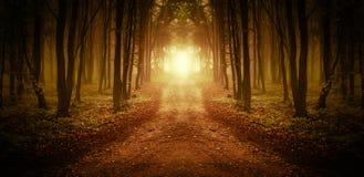 Path trough a magical forest at sunrise