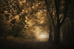 Path trough mysterious forest in autumn stock image