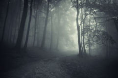 Path trough mysterious forest with fog stock photos
