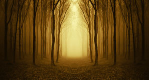 Path trough a strange forest with fog in autumn Royalty Free Stock Image