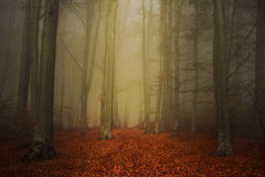 Path trough a strange forest with fog in autumn stock image