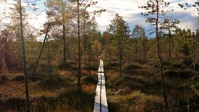 Follow your journey. Path trought forest in Oulanka national park, Finland Royalty Free Stock Photos