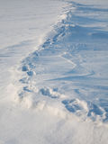 The path on the tundra Stock Photography