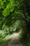 Path through a tunnel branches. A path that crosses a natural tunnel of branches and heads into nature Royalty Free Stock Image