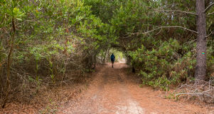 Path through a tunnel made out of trees Royalty Free Stock Images