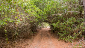 Path through a tunnel made out of trees Stock Photo