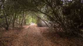 Path through a tunnel made out of trees Royalty Free Stock Photography