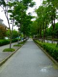 A path through two rows of trees Royalty Free Stock Photography
