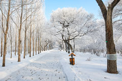 The path in the undefiled fairy tale world in the winter. The photo was taken in forest park  Daqing city Heilongjiang province,China Stock Photos