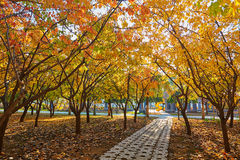 The path under autumn trees Stock Image