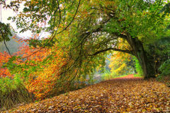 Autumn tree arch Stock Photos