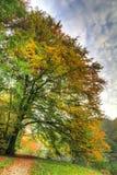 Autumn tree passing Stock Photos