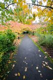 Path under trees during Autumn royalty free stock images