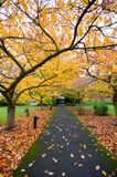 Path under trees during Autumn royalty free stock photos