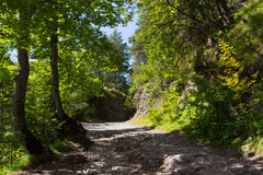 Path under the trees II. Stock Images