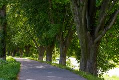Path under the trees. Of longest linden alley in Europe. location Uzhgorod, Ukraine Royalty Free Stock Photos