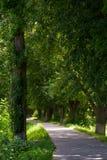 Path under the trees. Of longest linden alley in Europe. location Uzhgorod, Ukraine Stock Photos