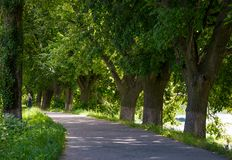 Path under the trees. Of longest linden alley in Europe. location Uzhgorod, Ukraine Stock Images
