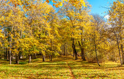 Path under the yellow trees and blue sky - autumn Royalty Free Stock Photography