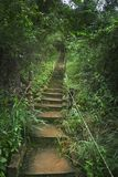 The Path Up. Steps to a path in the forest Royalty Free Stock Photography