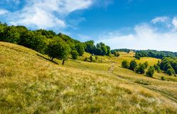 Path up the forested hill. Beautiful summer landscape in mountains Stock Images