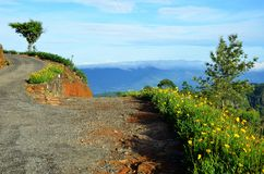 Path up the hill at tea plantations Royalty Free Stock Images