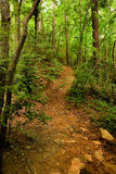 Path Up Hill In Woods Stock Photography