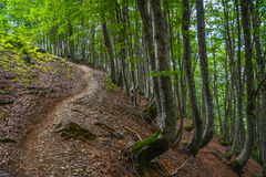 Path up through the woods on a mountain slope Royalty Free Stock Photo