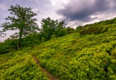 Path uphill the grassy hillside in to the forest. Lovely summer scenery on a cloudy afternoon Royalty Free Stock Photography