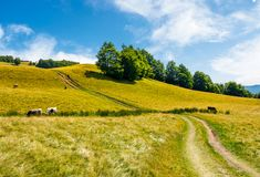 Path uphill through grassy meadow. Few cows grazing in the distance. lovely countryside summer scene Royalty Free Stock Photo