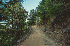 A path uphill through a pine forest Stock Image