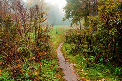 Path through the valley in the fog Stock Photography