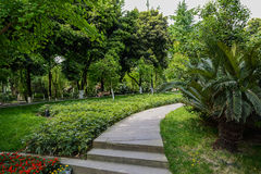 Path in verdant spring Stock Image