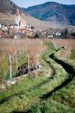 Path through vineyard Stock Photos