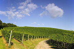 path through vineyard Royalty Free Stock Images