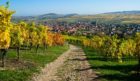 Path in the vineyards in Alsace. Autumn in the vineyards above the little village of Westhalten in Alsace. Path in the vineyards stock photos